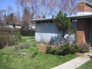 Removing bush from front of the house